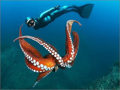 осьминог картинки фото